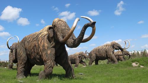 壁纸 大象 动物 犀牛 野生动物 500_280
