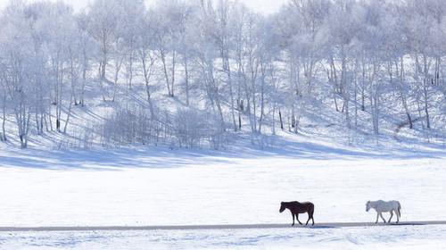 乌兰布统的#旅图换旅费# #冬景# #秋景#