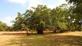 佩拉德尼亚皇家植物园2