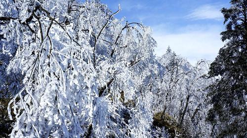西岭雪山:国家级风景名胜区西岭雪山位于成都西郊大邑县境内, 距成都