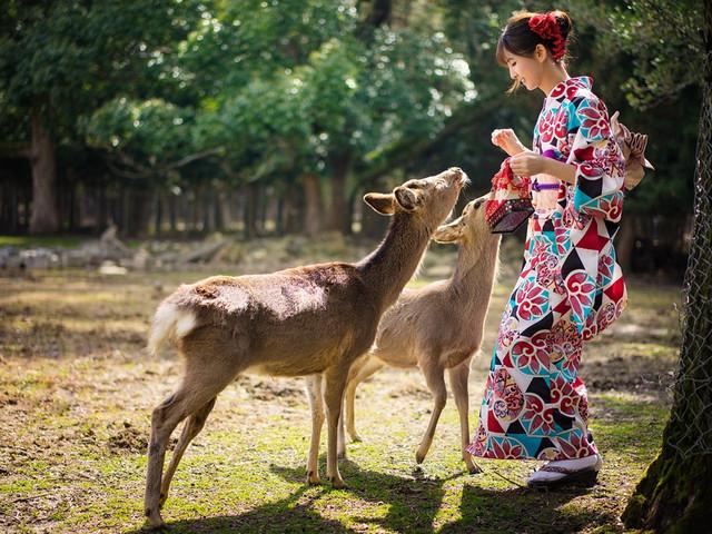 <日本关西1日游>京都奈良双古都 一人成团 每天必发