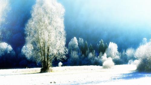 冬天来了,关于冬天的优美词句图片