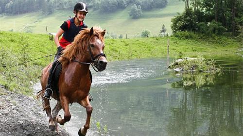 壁纸 动物 马 骑马 500_280
