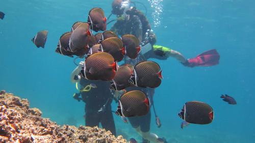 <泰国-普吉岛-PP岛5或6日游>深圳直飞,人气餐厅,快艇往返PP岛、小PP环岛、帝王岛浮潜、珊瑚岛,免去坐大船的劳累,B行程多一天自由活动