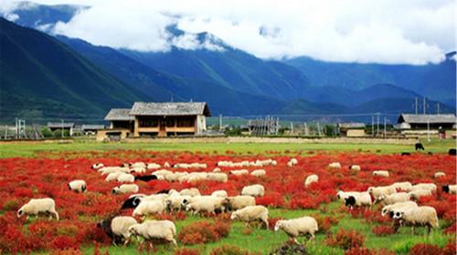 香格里拉小中甸_ 香格里拉2日游>0购物,品牦牛肉火锅,看普达措,松赞林寺