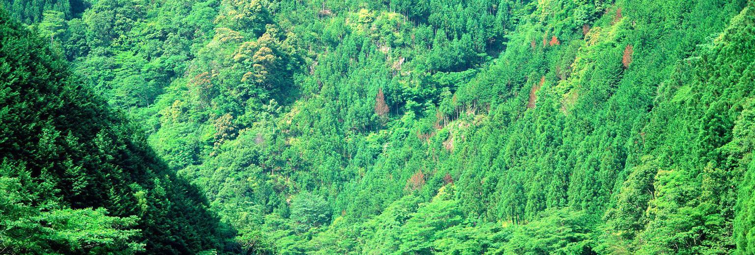 山中雨林手绘图