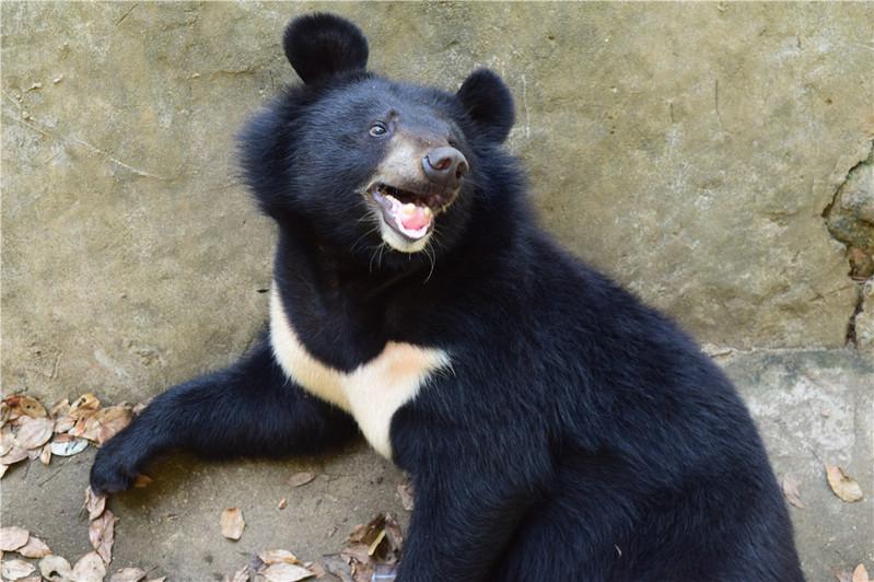 武汉九峰森林动物园一日游