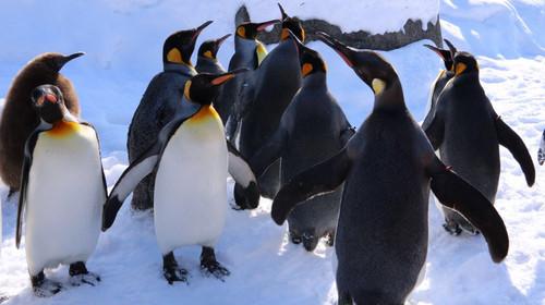 动物园,园区里的海豹馆,可以清楚的看见海豹悠游的景象,企鹅馆的企鹅