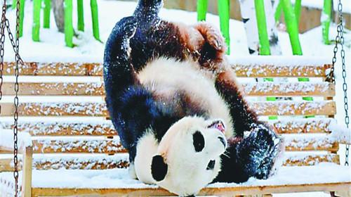 场馆内为熊猫玩耍搭设的小滑梯,戏水池,攀爬的树杈.