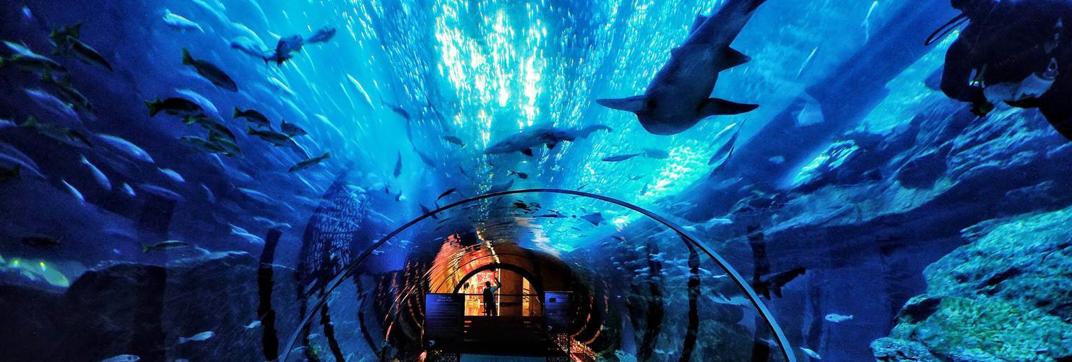 青岛海昌极地海洋世界旅游攻略