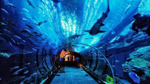 青岛极地海洋世界