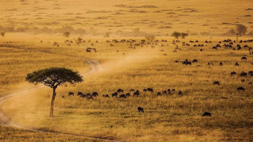 [春节] 坦桑尼亚动物大迁徙-桑给巴尔岛9日游>塞伦盖蒂2晚国际五星