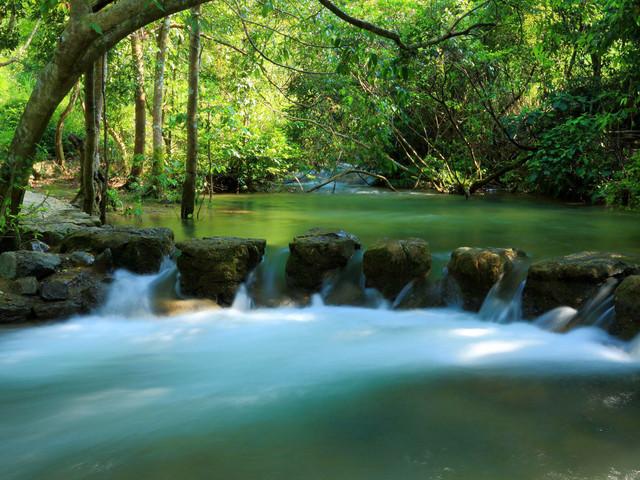 水上森林图片