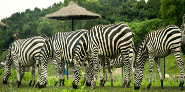 沈阳森林动物园位于棋盘山