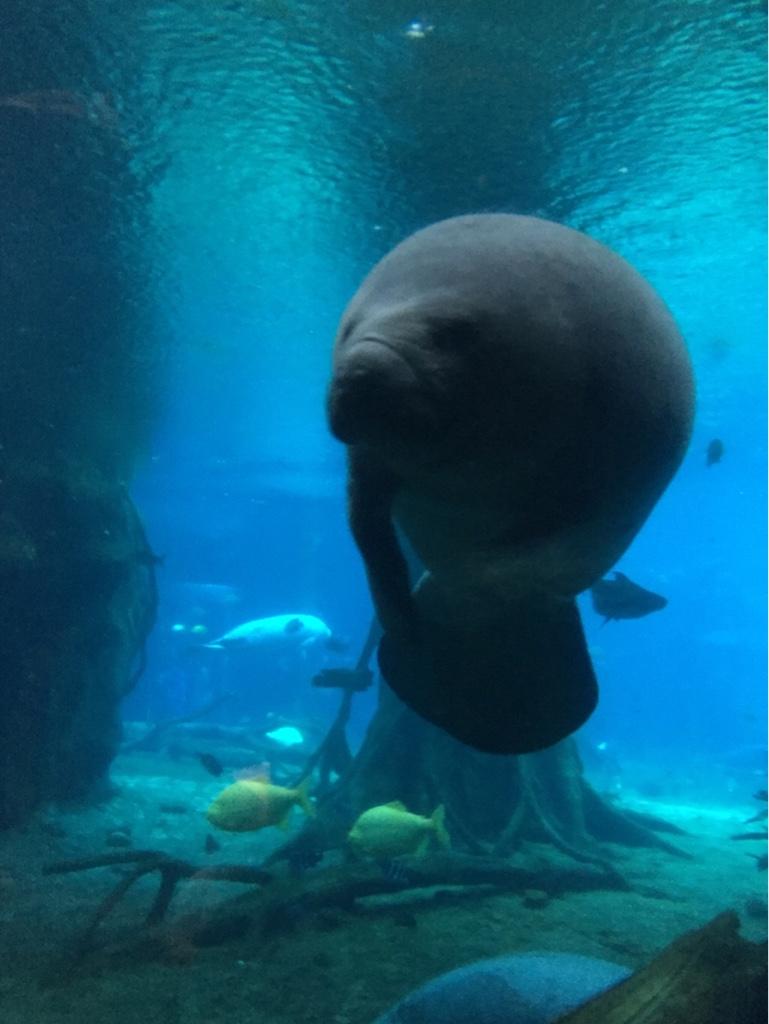 广州长隆野生动物园-珠海长隆海洋王国双飞半自助4日游>2晚5星长隆