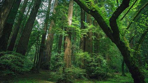 雨林动物风景画
