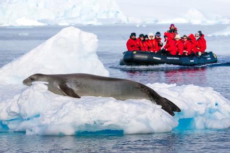 [春節]<全程中文領隊+南極半島17日游>深度南極半島破冰探險*享之旅、極地輕*小型探險游輪、春節南極行
