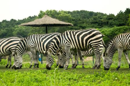 沈阳森林野生动物园 方特欢乐世界2天1晚景酒套餐>住