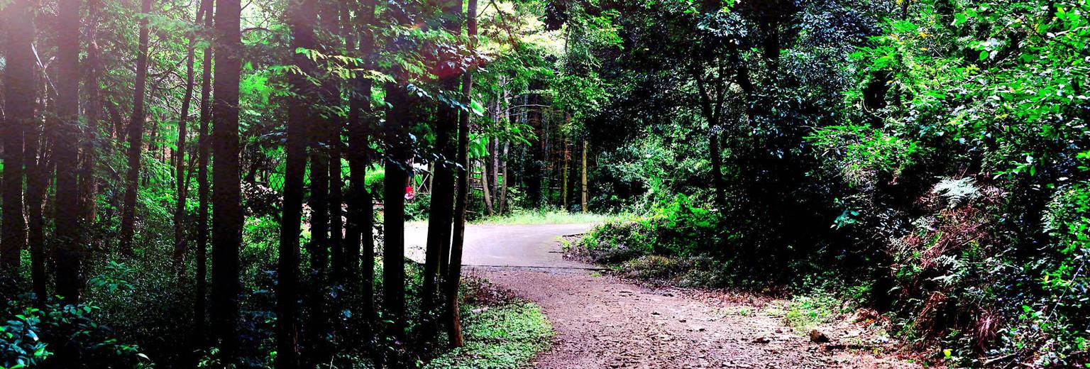 金华武义牛头山国家森林公园