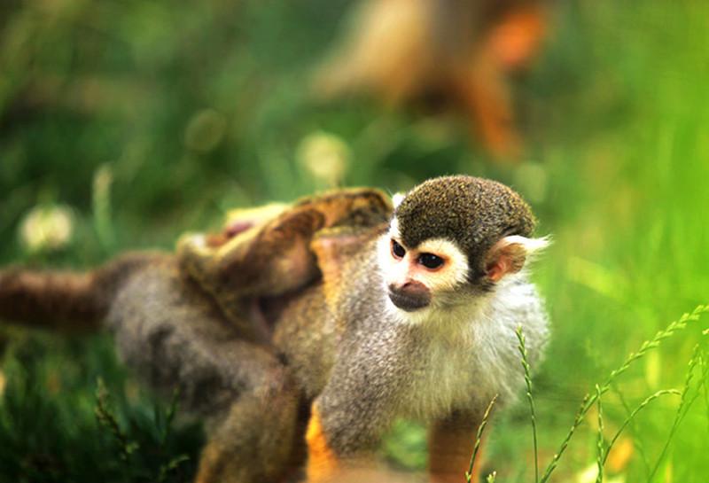 二月去大连森林动物园旅游必备物品_二月去大连森林动物园旅游游玩