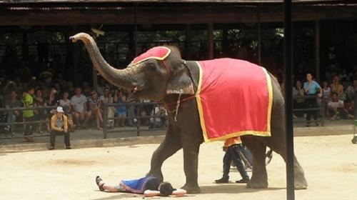 大象现场作画表演,欣赏可爱大象自由随性挥瀷表演独创的绘画天份.
