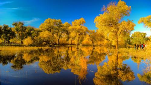 此处是集巴丹吉林沙漠和胡杨林为一体的丰富景观,沙漠,胡杨,骆驼队和