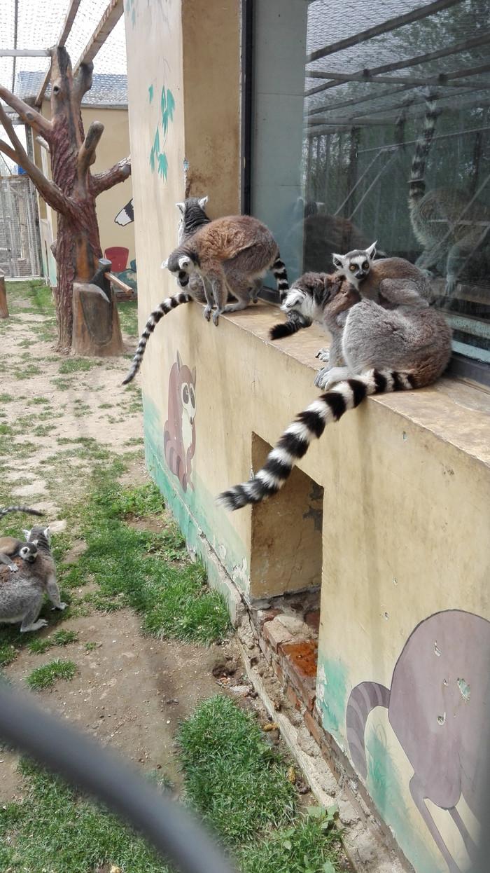 总的来说大青山野生动物园动物种类不算多,票价偏贵,旅游车