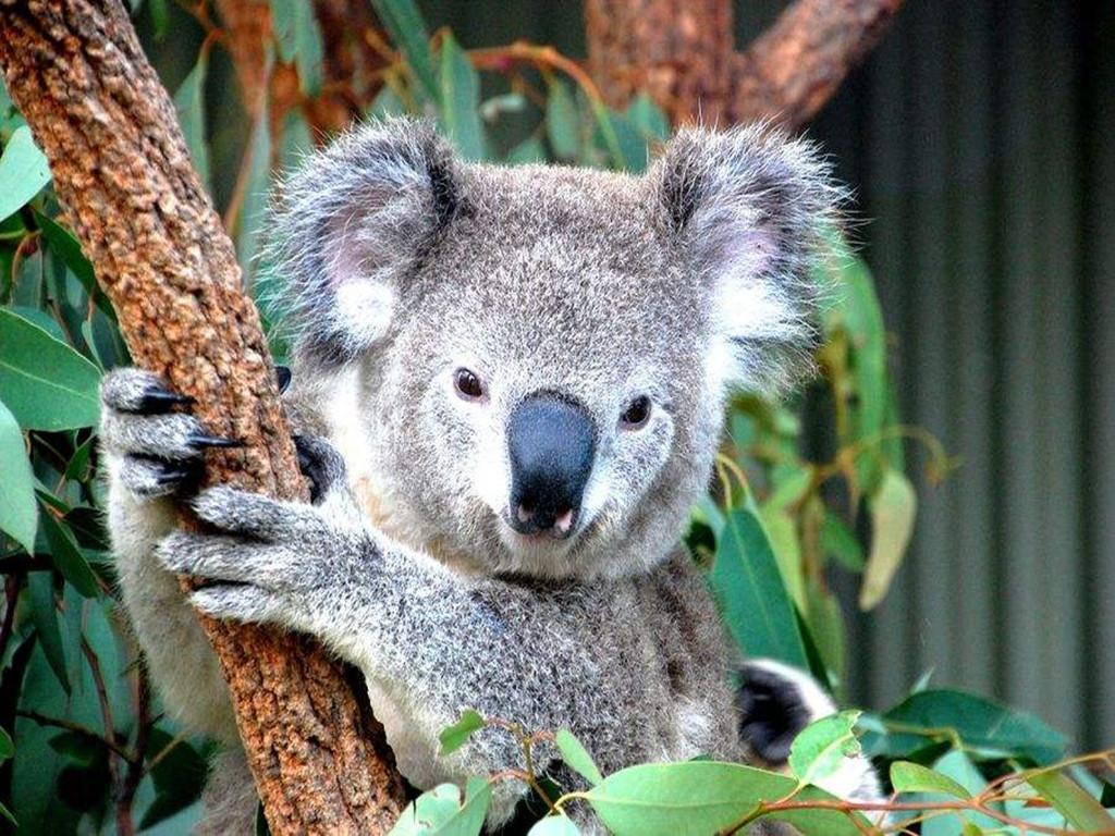 精灵传奇:【天堂农庄】亲密接触澳大利亚本土可爱的动物 妙趣横生的