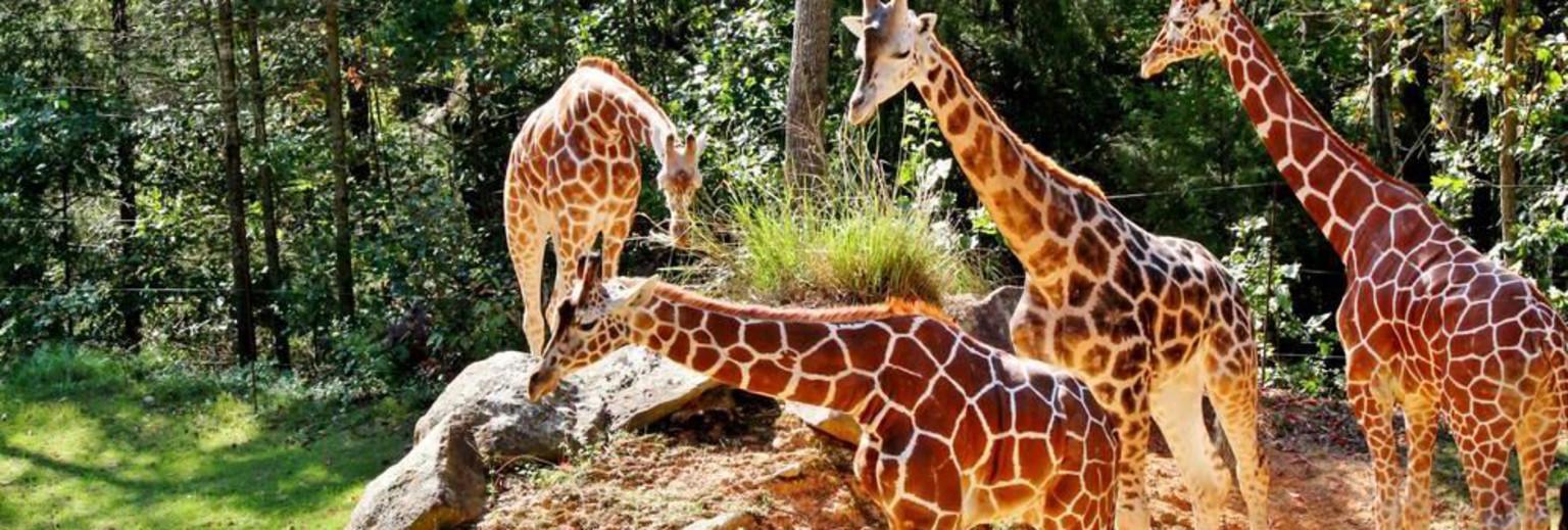 内罗毕旅游景点 长颈鹿公园旅游攻略  有3张图 新 人 专 享 ¥150