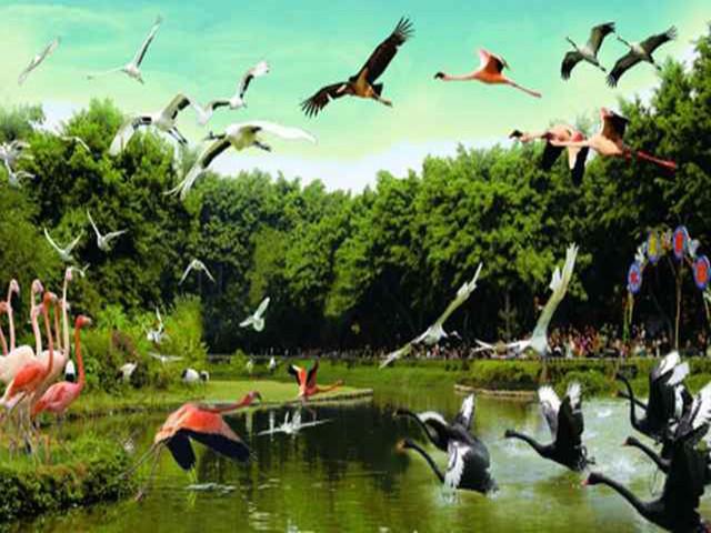 广州长隆-珠海长隆-长隆野生动物园-珠海海洋王国双卧6日游>郑州往