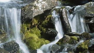 观赏白水仙瀑
