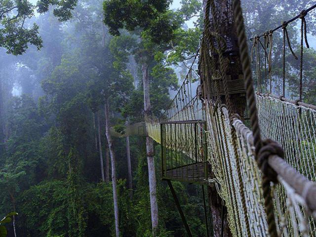 西双版纳 野象谷 热带雨林国家公园 勐仑植物园4日游 全程0购物 泼水节狂欢 体验篝火晚会 去神奇的雨林 放心轻松游 2人起订图片