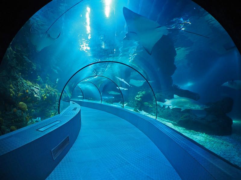 长风公园水族馆门票_长风海洋世界和上海水族馆,哪个比较好玩?-关于上海水族馆和 ...