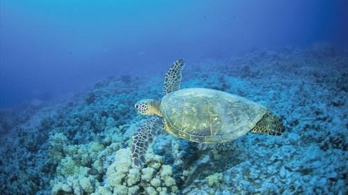 巴厘岛7日游
