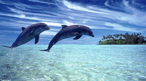 壁纸 动物 海洋动物 桌面 500_280