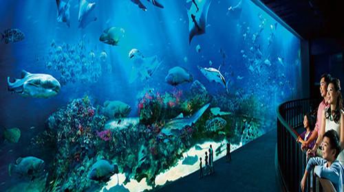 sea海洋馆图片