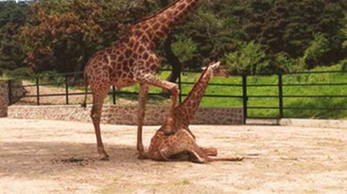 沈阳棋盘山森林野生动物园1日游>秋高气爽一起来玩吧