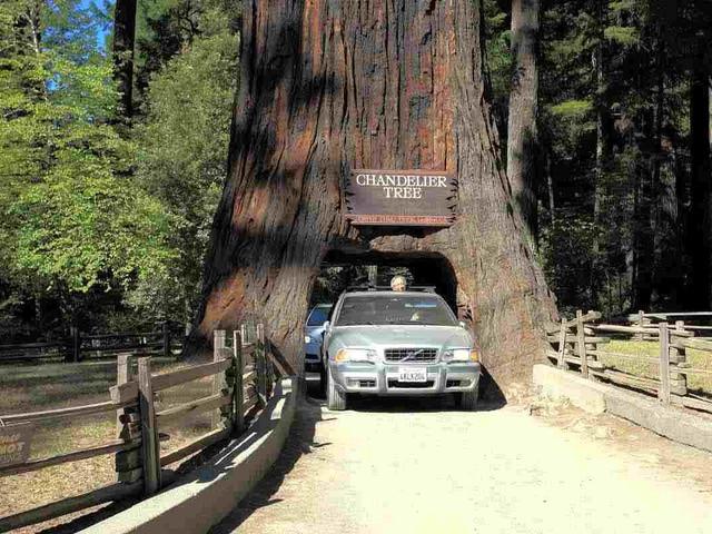 <旧金山缪尔国家森林公园+索萨利托小镇一日游>(搭乘随上随下观光巴士)