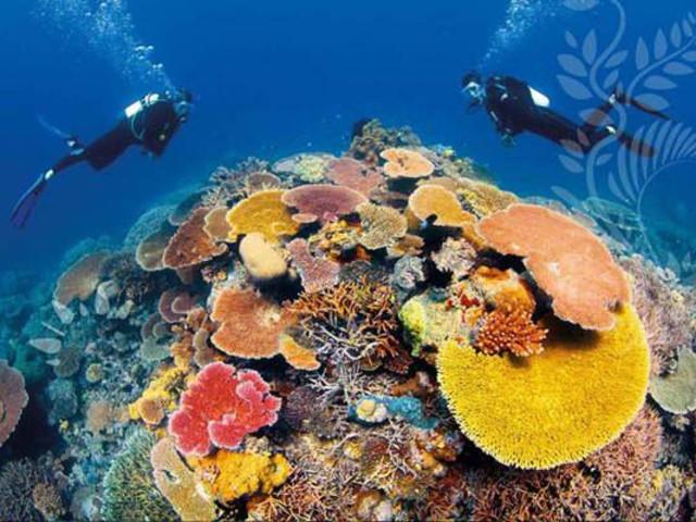 <凯恩斯大堡礁四天一晚PADI开放水域初级潜水课程>(获得OW证书)