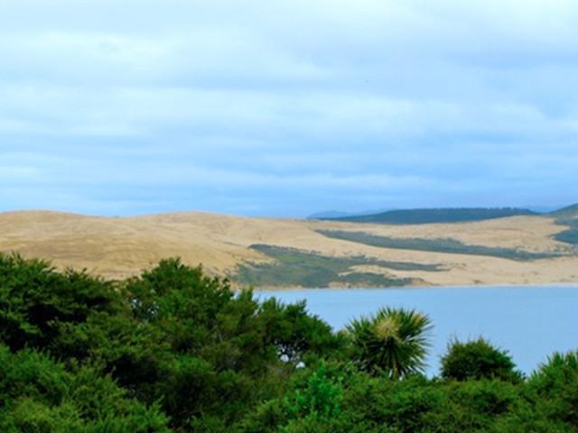 <新西蘭 赫基昂加小鎮巨型貝殼杉樹和螢火蟲發現之旅>(派希亞出發)