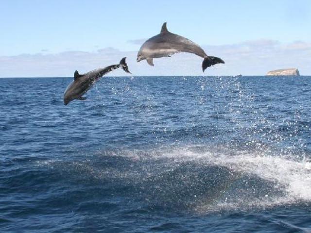 <塔斯马尼亚布鲁尼岛3小时沿海旷野游船之旅>(自驾推荐)