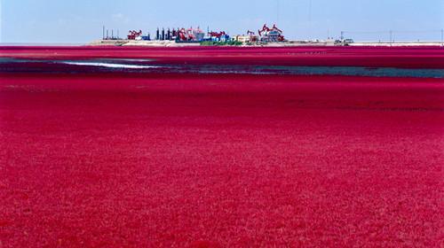 [国庆] 大连-金石滩--红海滩-鲅鱼圈-圣亚海洋世界-东海公园4日游>