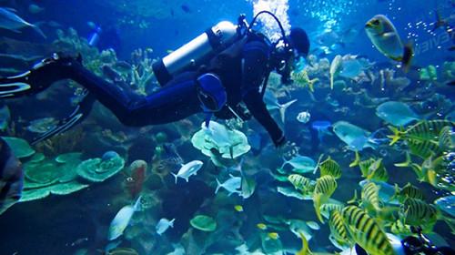 潜入海底,探索神秘的海底世界(深海潜水)