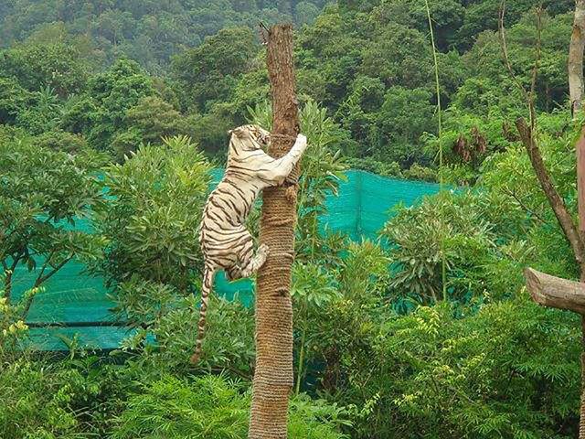 芭提雅绿山野生动物园