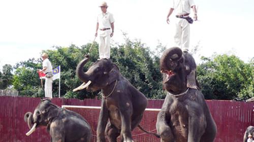 鸡,人猿,小马等,14:15西部牛仔表演(30分钟)大象表演(30分钟)野生动物