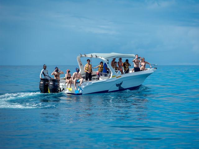 【限时特价】<毛里求斯快艇追海豚+自然桥+蓝湾玻璃底船浮潜一日游>品质小团游,豪华龙虾餐可选,年轻火辣的导游团队