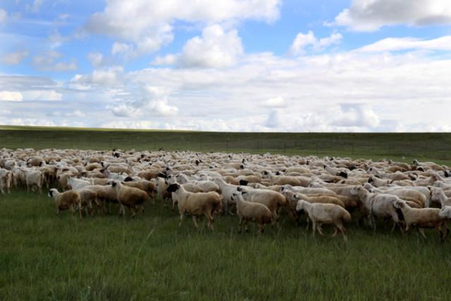 草原羊群风景图片