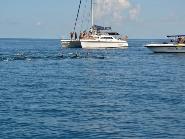 <毛里求斯双体船看海豚+月亮岛浮潜一日游>