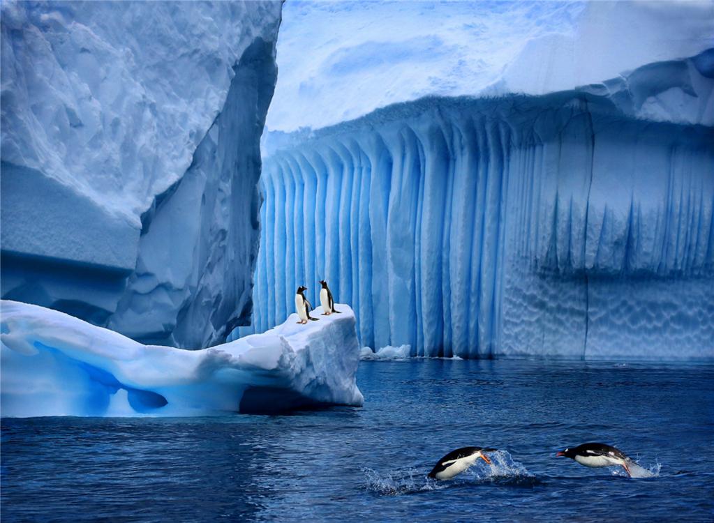 [春节] 深入南极三岛 半岛 南设特兰 南乔治亚 华人包