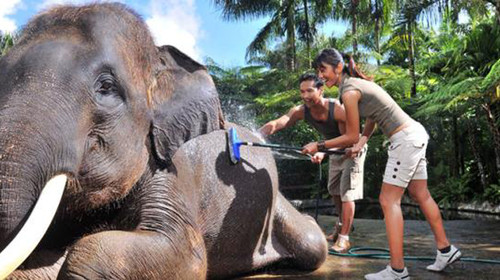 主题活动:听象爸爸讲人与象的故事,跟象爸爸到雨林中放象,给大象洗澡